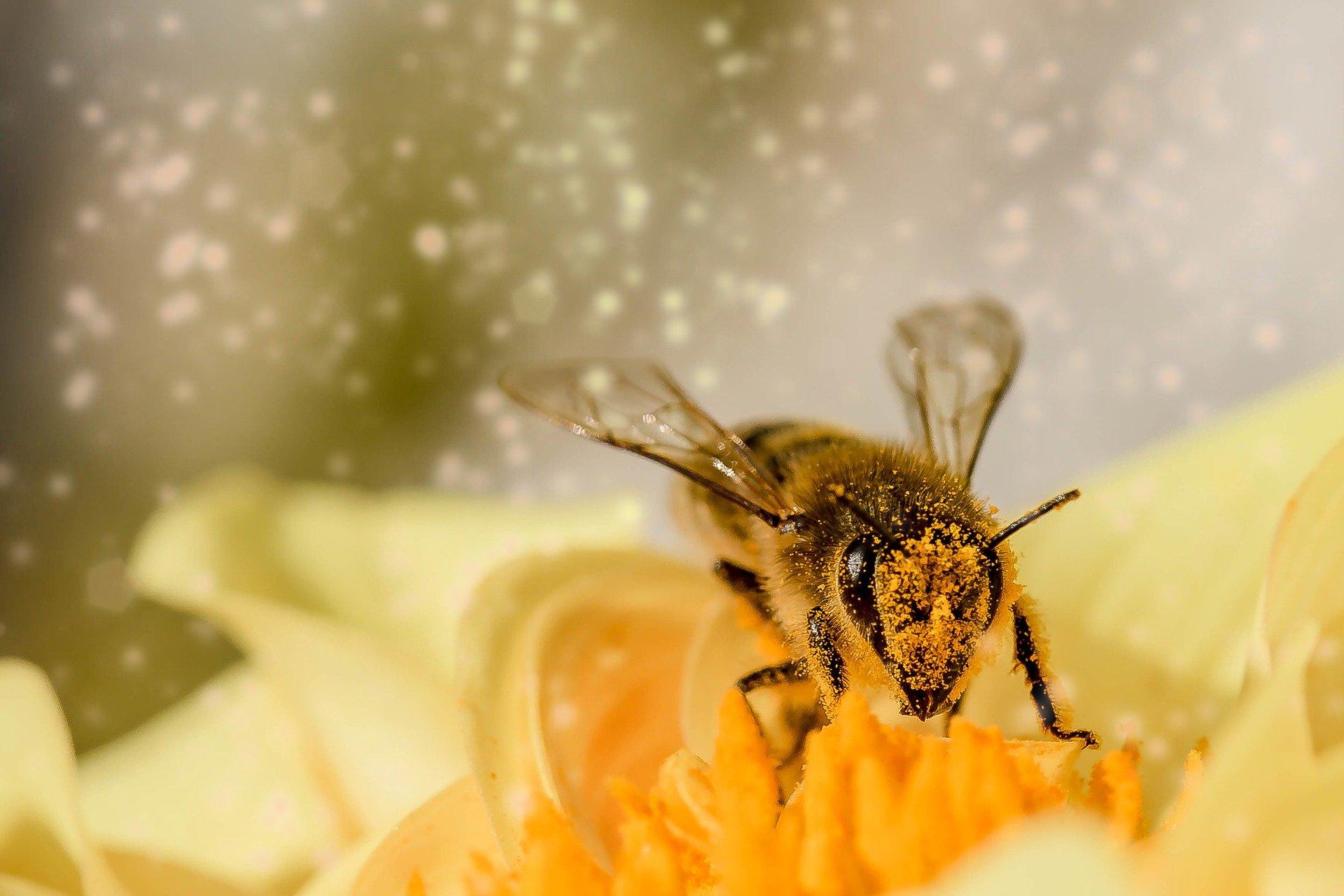 Bienenwachstücher Gestalten Und Der Umwelt Helfen!